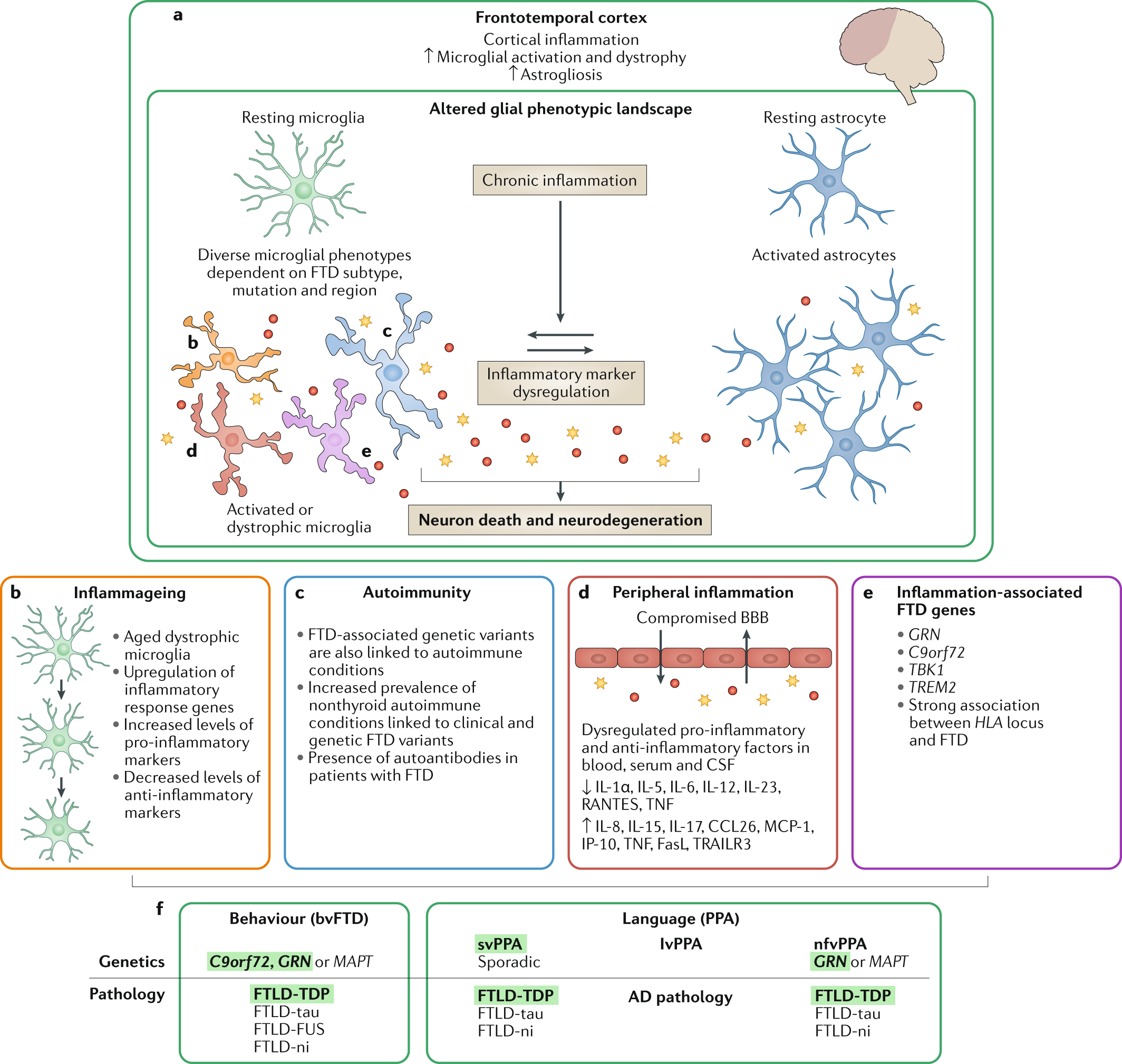 Neuroinflammation In Frontotemporal Dementia | Nature