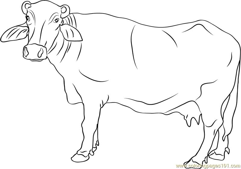 Banni Buffalo Coloring Page For Kids - Free Buffalo