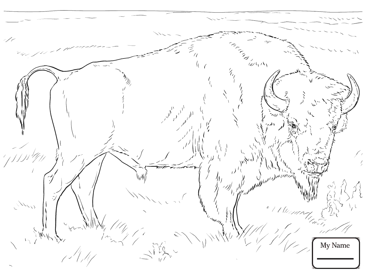 Buffalo Coloring Pages For Kids At Getcolorings | Free